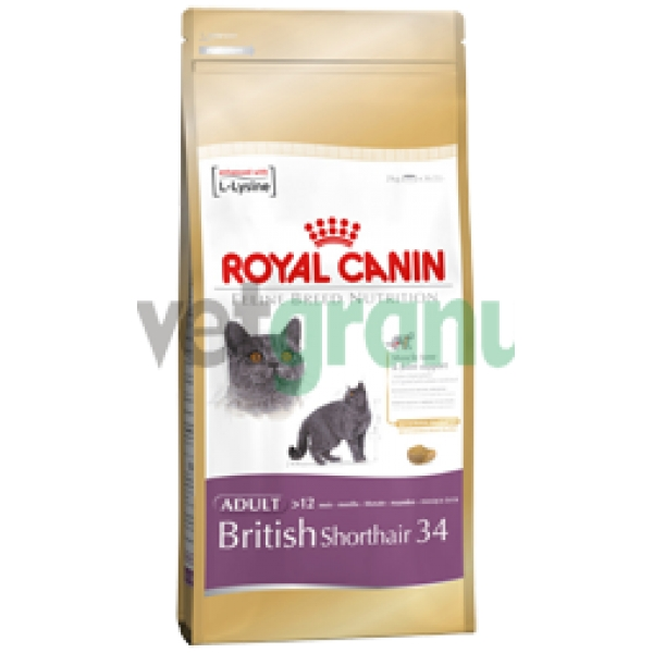 royal canin feline breed british shorthair 2kg jen za 423 k. Black Bedroom Furniture Sets. Home Design Ideas