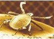 Antiparazitární přípravky