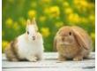 Krmivo-králík