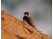 Písky a podestýlky ptactvo